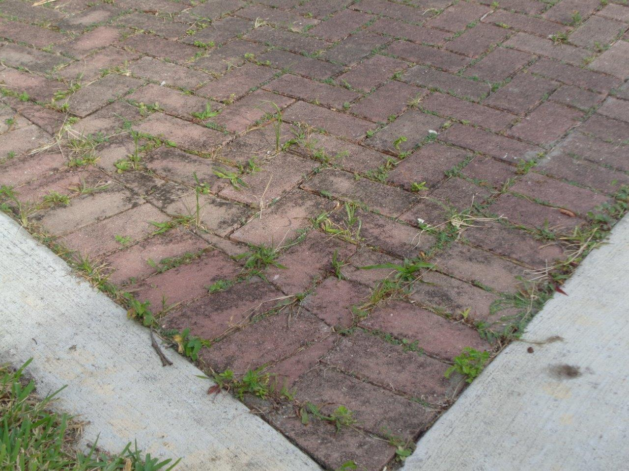 Maintain Pavers