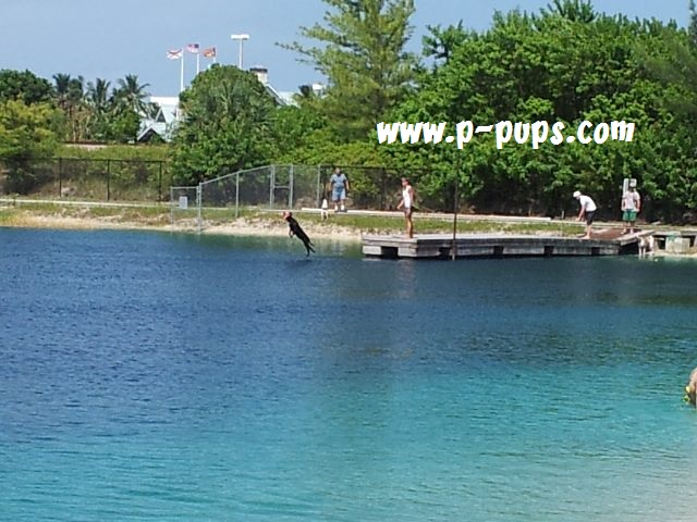 Tigertail Lake Dog Park